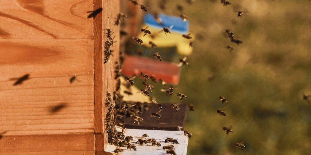 pszczola-ul-elk
