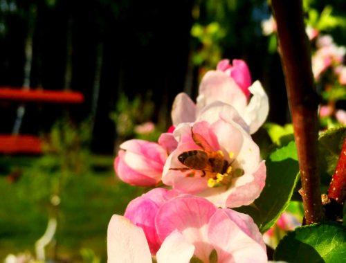 mazurski nektar kwiatowy