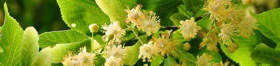 drzewo-kwiatowe